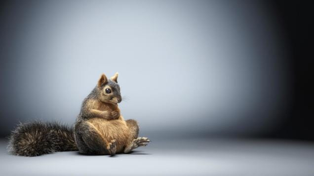 Lorett foth squirrel art vray 3ds max