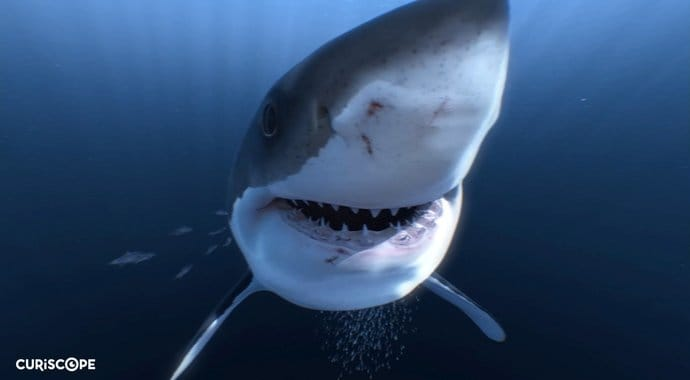Hamilton kidd great white sharks vr advertising vray maya 01