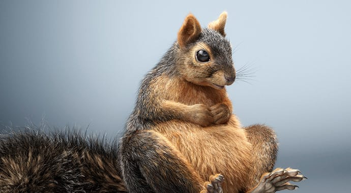Lorett foth squirrel art vray 3ds max thumb