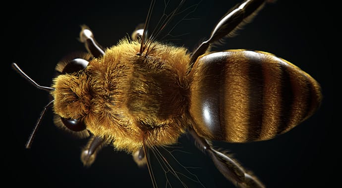 Dabarti studio bee top art vray 3ds max gpu thumb