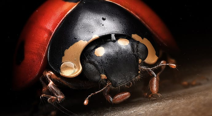 Denis bodart lady bug art vray 3ds max thumb