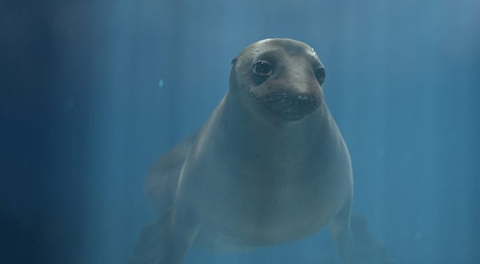 Underwater 3D sea lion created for O2 couples campaign by alien studio rendered using 3ds Max and V-Ray